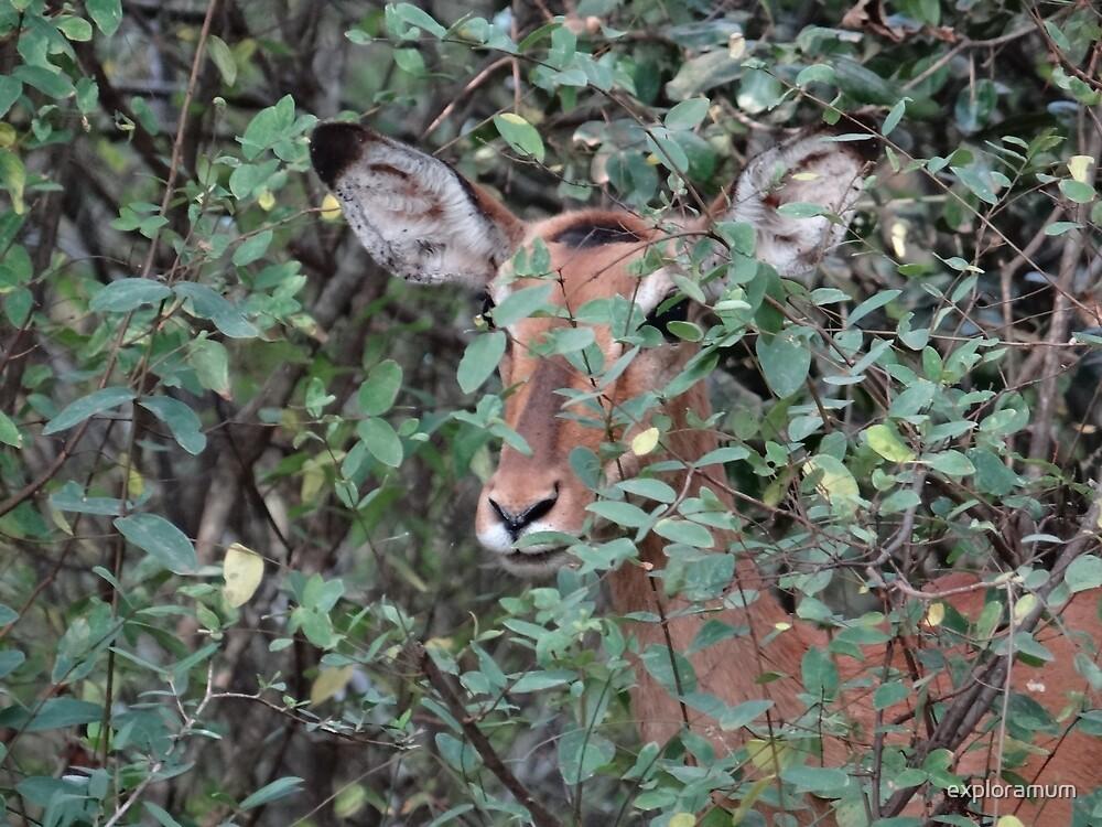 Africa - Animals in the wild 4 by exploramum