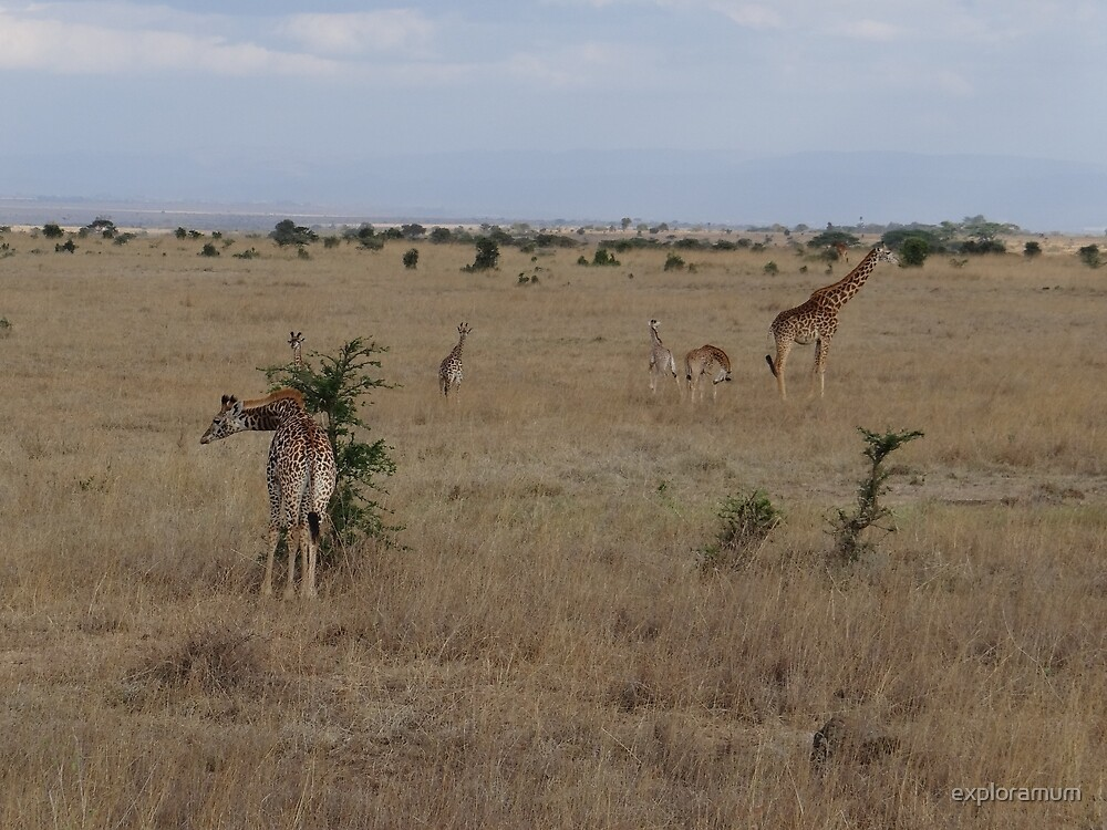 Giraffes in Nairobi National Park 1 by exploramum