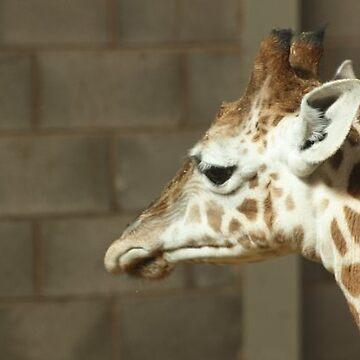 baby giraffe by punkymonkey