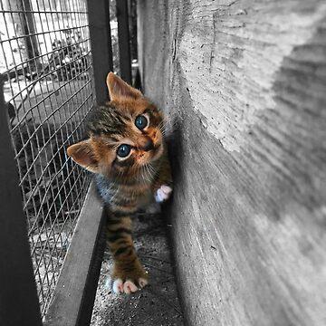 Beautiful Stray Tabby Kitten by juniperdesign