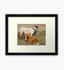 Horses in Kjos Framed Print