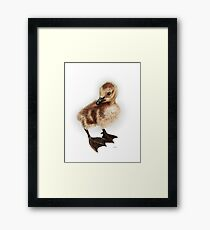 Canadian Gosling - cute baby goose Framed Print