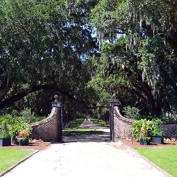 Entrance to Boone Plantation by bradleyduncan