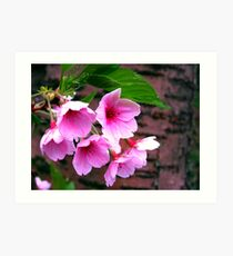 Sarehole Mill Blossom Art Print