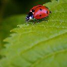 Mrs. Bug by Christopher Bookholt