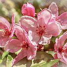 Apple blossom by Svetlana Korneliuk
