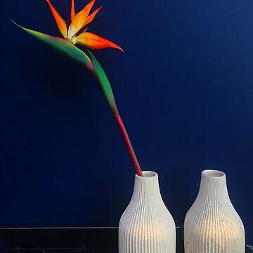 Strelitzia flower by BrunoBeach