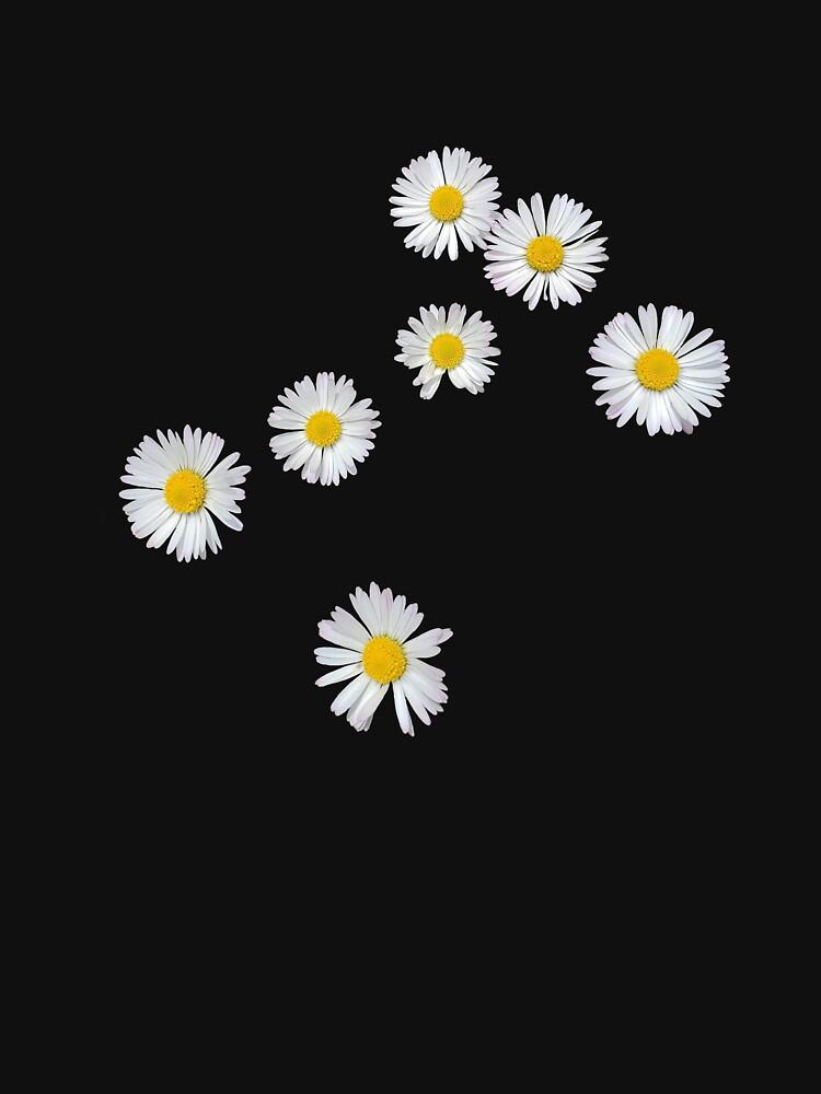 Gänseblümchen von Keledora