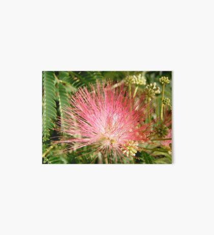 Mimosa Art Board