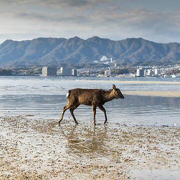 Deer at Miyajima Beach, Japan by mariocassar