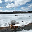 'Cindy in Maine, Eagle Lake 3' by Scott Bricker