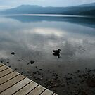 Lonely Duck by Laddie Halupa