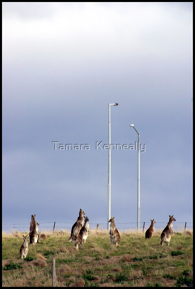Under The Shade Of The Street Lights by Tamara  Kenneally
