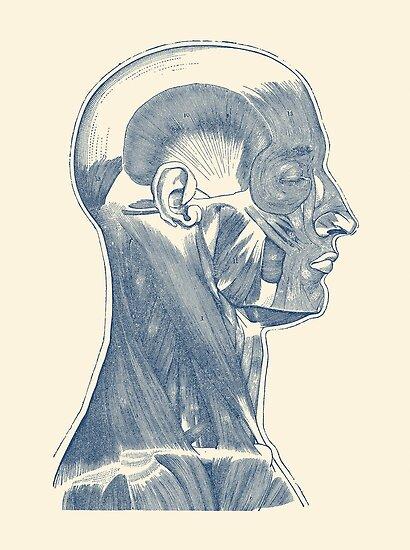 Pósters «Sistema muscular de cabeza y cuello - Diagrama simple» de ...