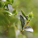 Rainy Morning by Tracy Friesen