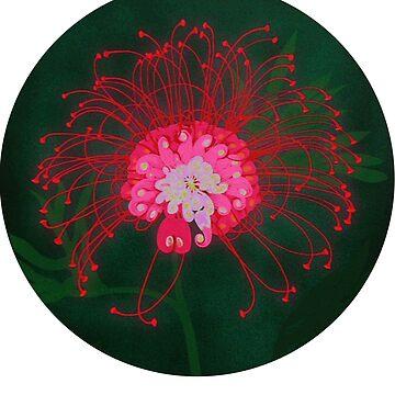 Australian Flower - Grevillea by lynchmob
