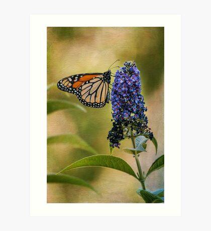 Monarch auf Schmetterlingsbusch Kunstdruck