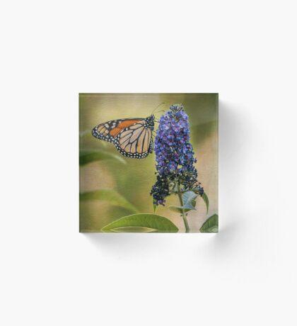 Monarch auf Schmetterlingsbusch Acrylblock