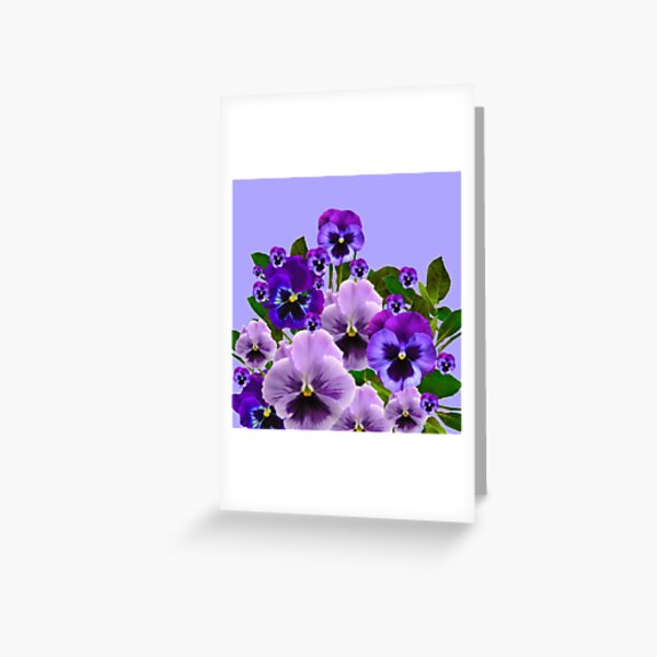 SPRING PURPLE PANSY FLOWERS  Greeting Card
