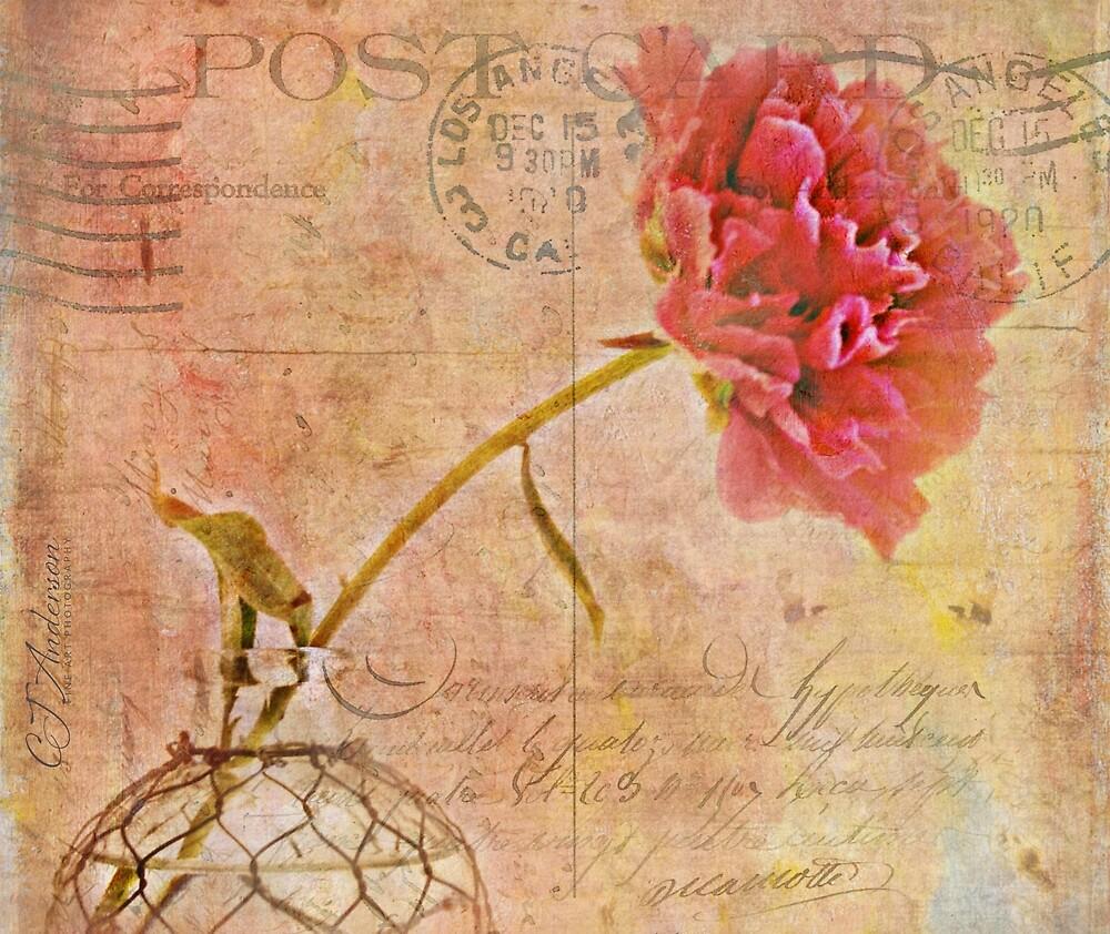 Peony Postcard by CJ Anderson