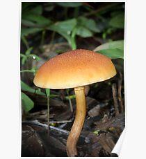 Fungi season 14 Poster