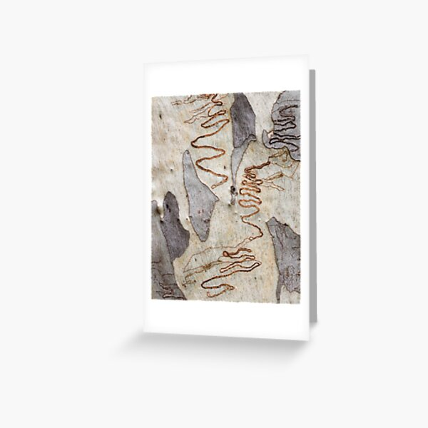 Scribbly Gum - Four Greeting Card