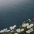 Ocean & Daisies - Landscape and Nature Photograph by ewkaphoto