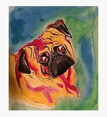 Edwin The Color Pug Photographic Print