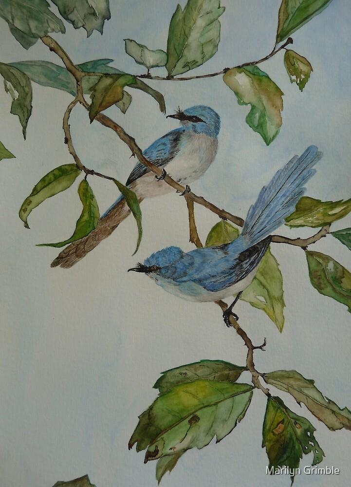 BLUE FAIRY FLYCATCHERS - sold by Marilyn Grimble