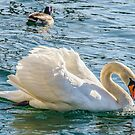 Swan On The Lake by jules572