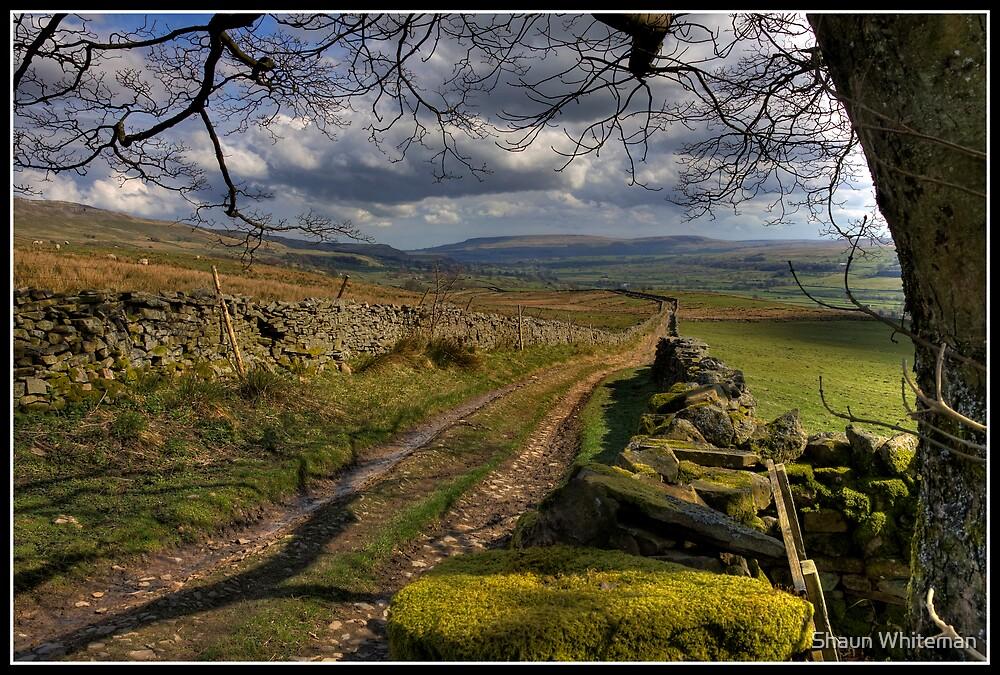 Dry stone walls above Askrigg by Shaun Whiteman