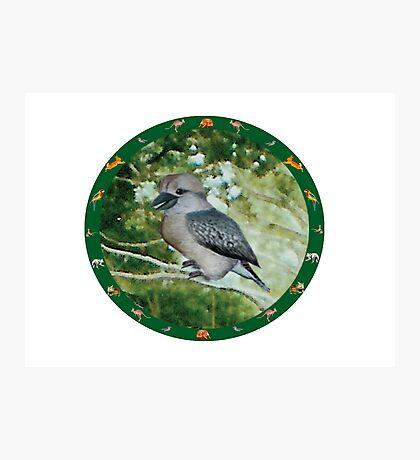 Kookaburra Photographic Print