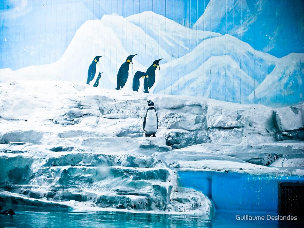 Lonely Penguin by Guillaume Deslandes