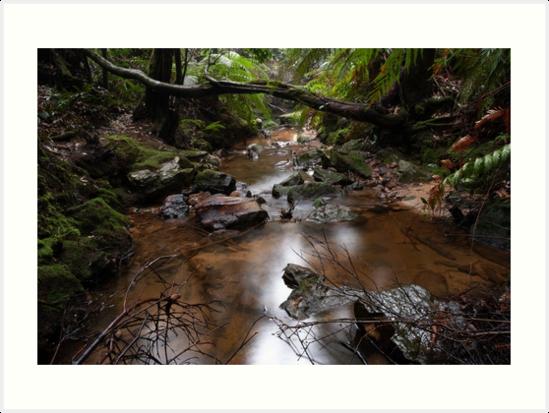 pools of siloam, Blue mountains, NSW, Australia by Willscape