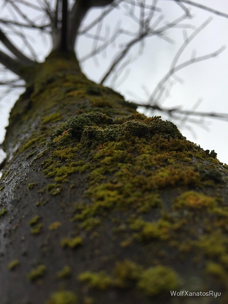 Moss by WolfXanatosRyu