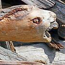 Sea Lion Driftwood by Tamara Valjean