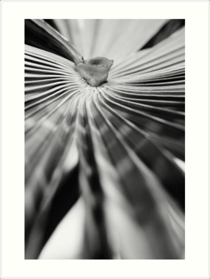Palm leaf by carlotoffolo