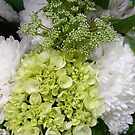 For the Love of Lime-green Hydrangeas  by Elaine Bawden