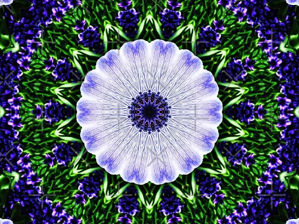 Anemone Manipulation  by Karen Stahlros