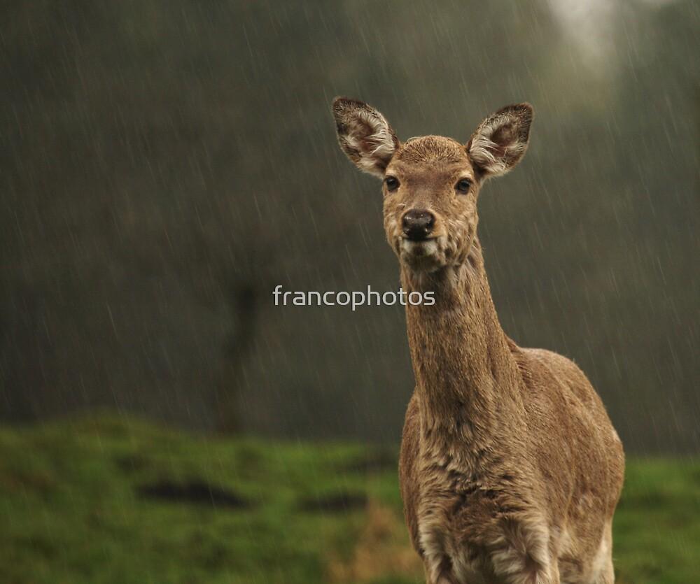 'Rain' Deer  by Franco De Luca Calce