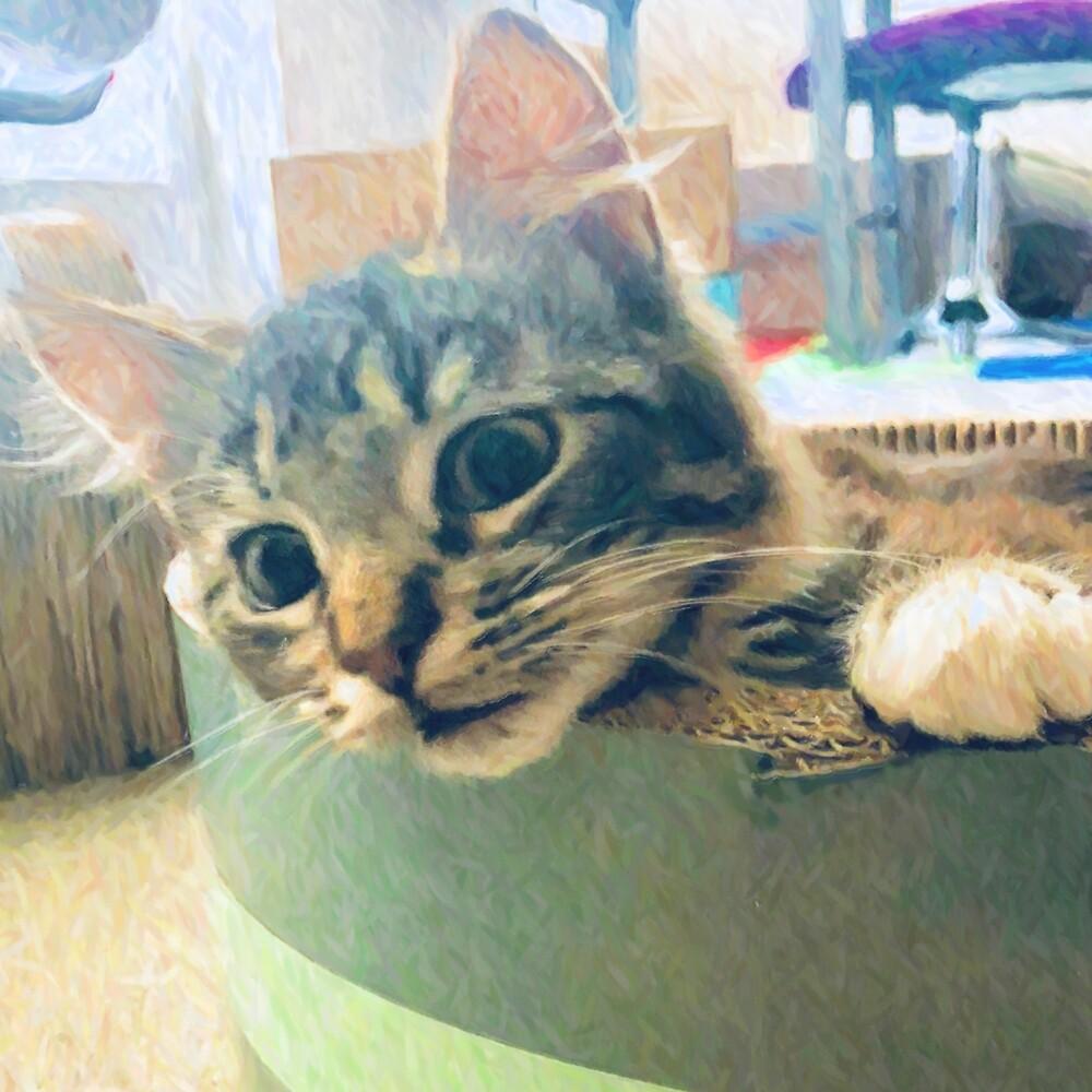 Curious Kitty by sarafian