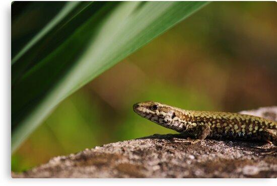 Portrait of a lizard by carlotoffolo