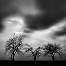 Elusive Solitude by Evan Ludes