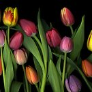 Painted Tulips by Scanart