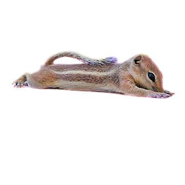 Desert Antelope Squirrel 1 by pberggr1