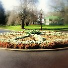 Floral pizza Garden  by cjcphotography