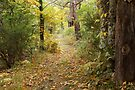 Autumn path in Provence forest by Patrick Morand