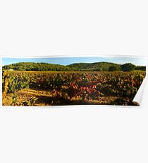 Provence vineyard in autumn Poster