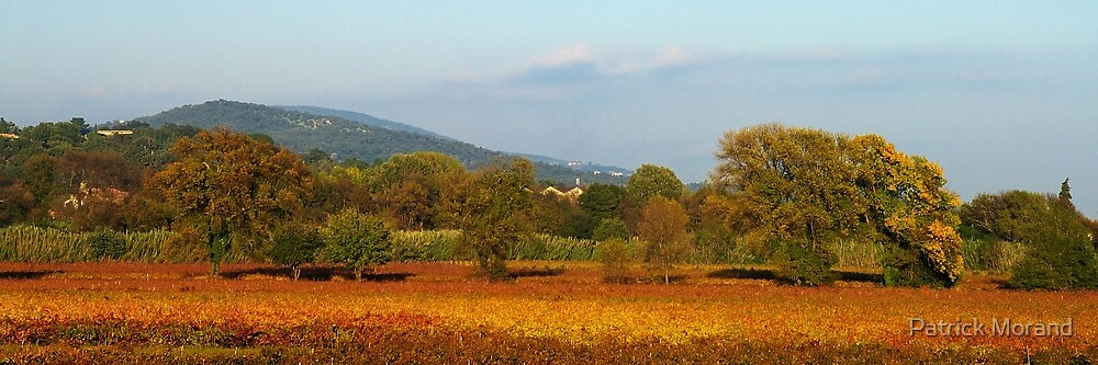 Autumn in Provence vineyard by Patrick Morand