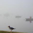 New England Fog by Linda Jackson